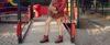 Trapery damskie z czerwonymi sznurówkami