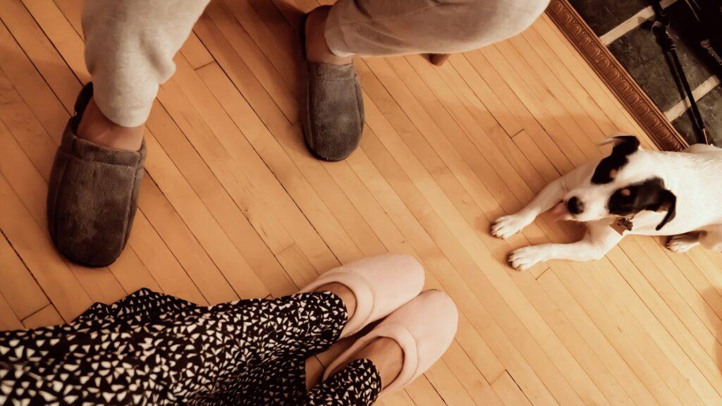 Kapcie i pies